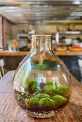 טרריום זה גם דרך להכניס צמחייה הביתה