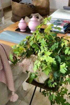 צמחיה מרעננת ושמחה עם שולחן פליז טבעי- עיצוב של עמית גלאור